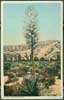 Image of front of postcard showing 'Spanish Bayonet' plant in the desert of the       American Southwest